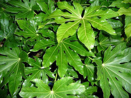 Trópusi hangulatot idéző télálló növények - PRÉRI KERT | Vadvirágok gyep helyett
