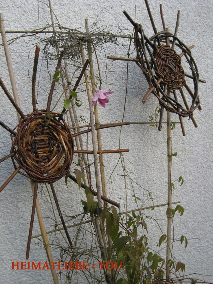 395 best weiden images on pinterest for Flechten im garten bekampfen