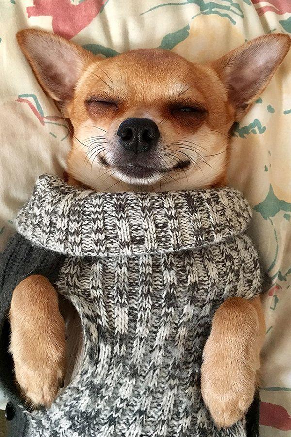 8 Cutest Sleeping Dogs Really Cute Dogs Sleeping Dogs Cute Dog