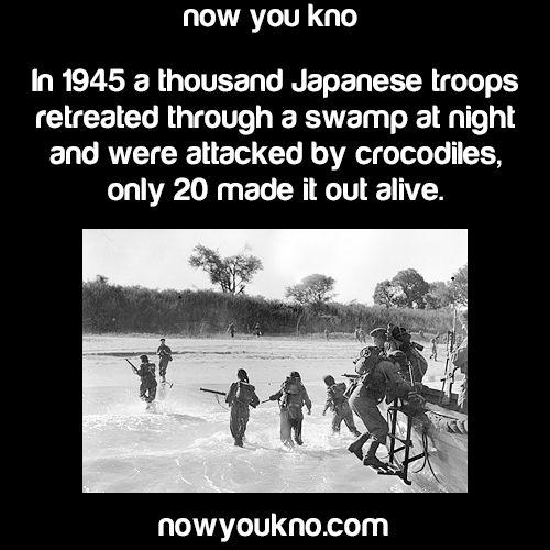 694 Best Historical Images World War Ii Images On