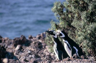 La Península de Valdés es un accidente de la costa en el mar argentino unido al continente por el Istmo Carlos Ameghino. Declarado Patrimonio de la Humanidad por la UNESCO. Posee diveros atractivos además del avistamiento de la abundante fauna: es excelente para el buceo entre sus arrecifes submarinos.
