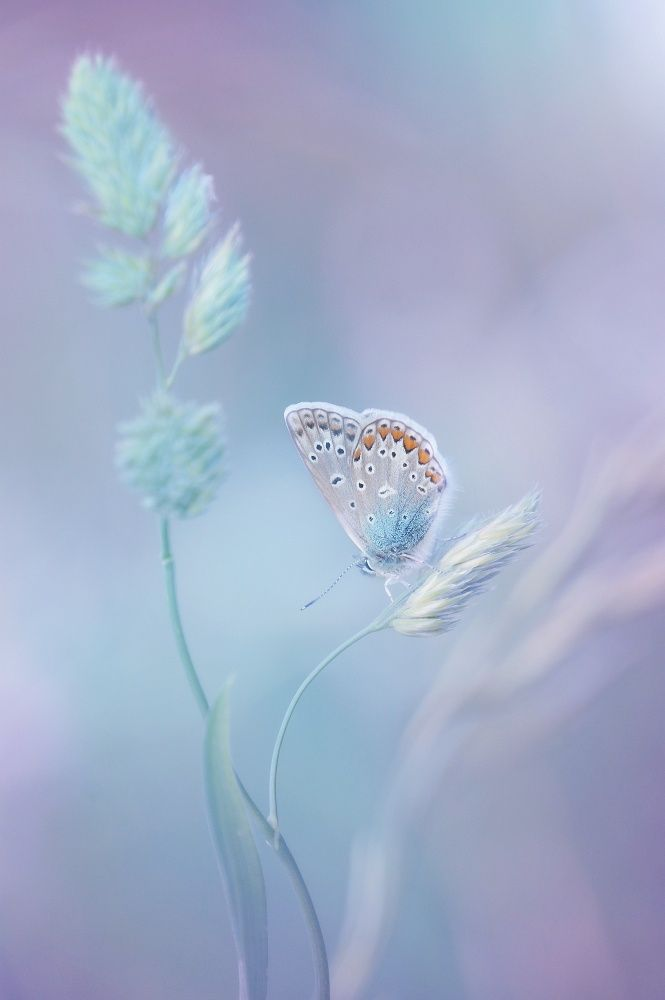 Delicate beauty by Laura Pashkevich on 500px