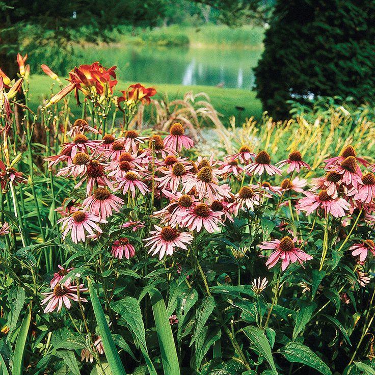 les 55 meilleures images du tableau soins et plantes fleur arbustes sur pinterest arbustes. Black Bedroom Furniture Sets. Home Design Ideas