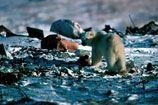 Biodiversite : statistiques mondiales écologiques en temps réel