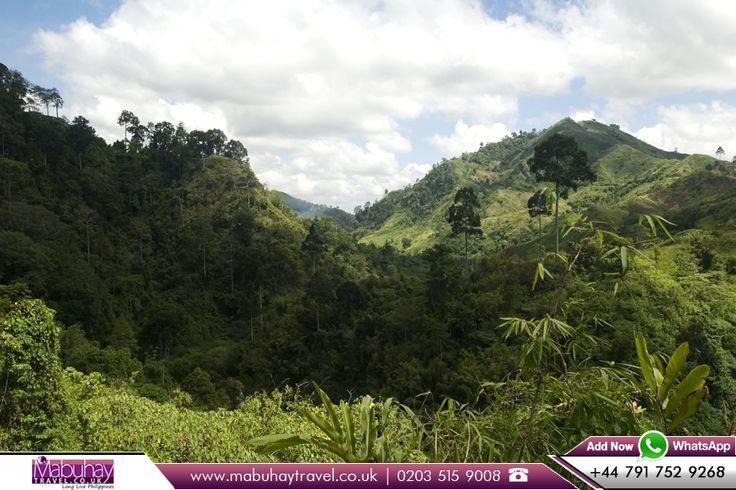 Jungle Valley, Mindanao, Philippines         WhatsApp: +44 791 752 9268      Call us: 0203 515 9008       Book Flights to Philippines with Mabuhay    Travel: http://www.mabuhaytravel.co.uk/        #philippines #travelphotography #adventure #beautifulphilippines #jungle #valley #mindanao #travellife #travelbug #travelstoke #happytravel #mabuhaytravel #flightstophilippines #cheapflights #flightoffers #flightpackages #travelphilippines #travelling #traveladdicted