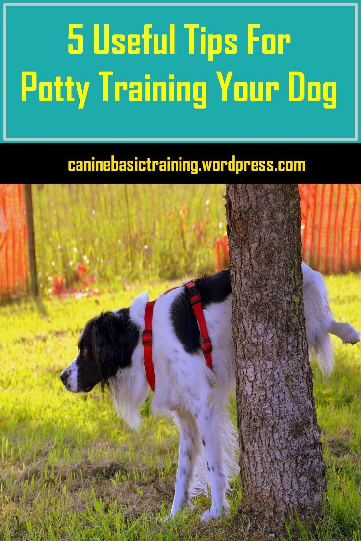 6 Useful Tips For Getting Your Dog Toilet Trained Dog Toilet