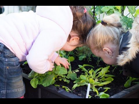 Teaching preschools how to grow vegetables - YouTube