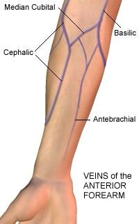 Upper extremity IV placement sites