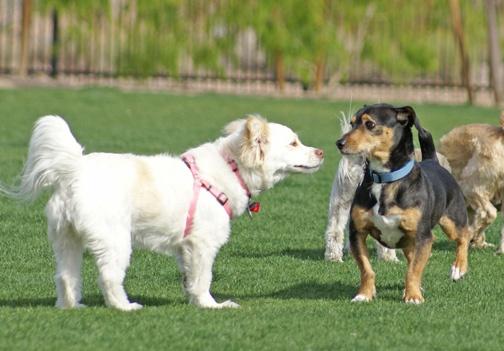 Jade and the new dog - 4/16/12Henderson Bark, Bark Parks, New Dogs