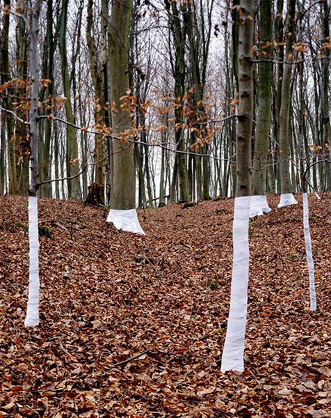 Tree, Line, Beautiful Wrapped Tree Installations by Zander Olsen