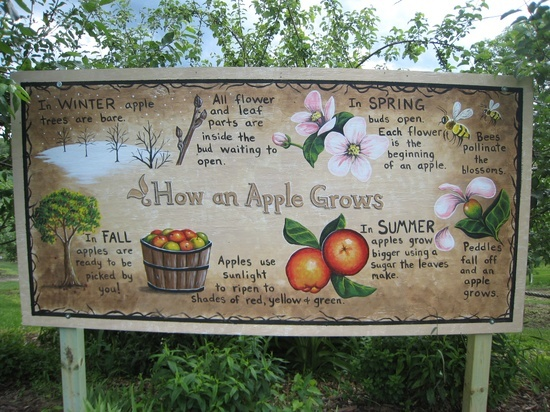 What you have to know about Apple tree      http://cutt.us/1aavTrees Http Cutts Us 1Aav, Apples Trees, Flower Petals, Apples Growing, Apples Orchards, Trees Httpcuttus1Aav