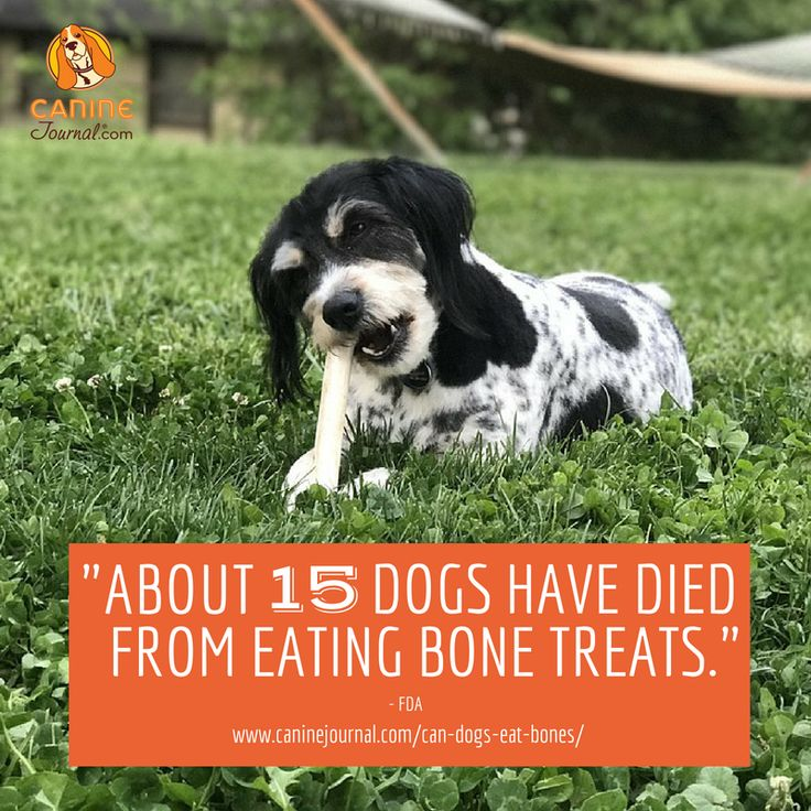 Can Dogs Eat Bones The Ultimate Guide To What S Safe And What S