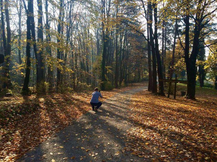 Jesen je bolja od zime, kažu, a Tibor kaže nije da tražim privatnost po šumi, prije dobar kadar... #CollocoMarketing