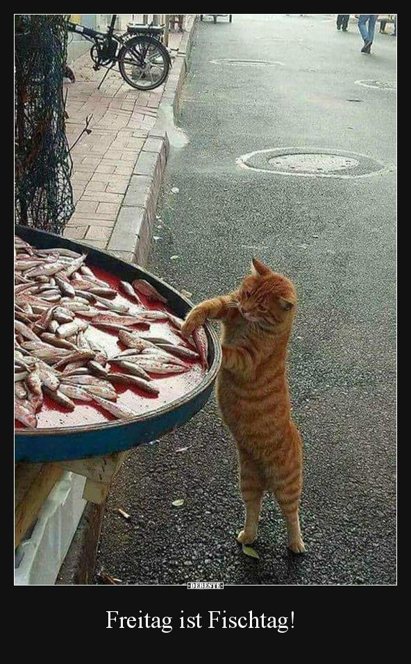 Freitag ist Fischtag! | Lustige Bilder, Sprüche, Witze, echt lustig