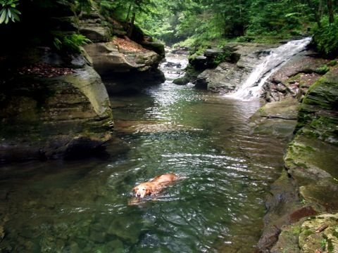 spring-fed Rock Creek in Loyalsock State Forrest, Pennsylvania