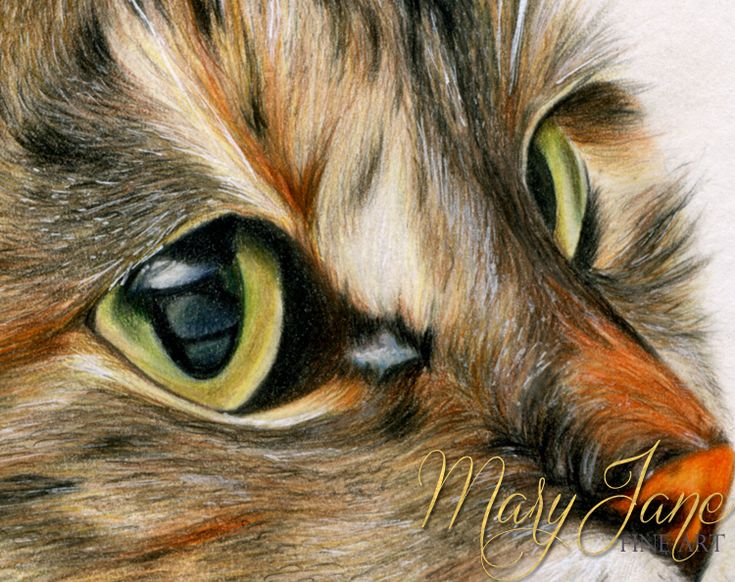 'Kitty' Close up of a colored Pencil Drawing by MaryJane Sky of www.maryjanefineart.com