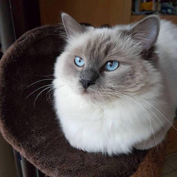 Buenos pensamiento  #ilovemycat #instagramcats #nature #catoftheday #lovecats #furry #lovekittens #adorable #catlover #instacat #amorporlosgatos no olvides visitarnos en facebook https://goo.gl/SoxhHJ #gatosbuenavida #gatosbonnevie #catbonnevie