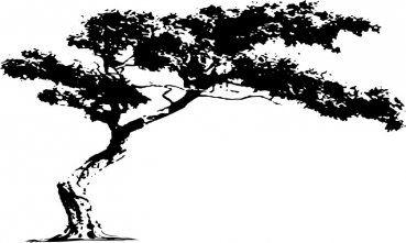 Simple xl xxl xxxl riesen wandtattoo aus velours leder baum in der savanne wald baeume drx flauschig fleece mega wand aufkleber in verschiedenen groesse u