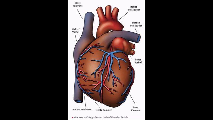 herzaufbau herzaufbau Unser wichtigster Muskel will gut gepflegt werden. Denn erkrankt das Herzherzaufbau drohen schwere Leiden wie etwa Herzinfarkt Koronare Herzkrankheit und Herzschwäche.herzaufbau Ein gesunder Lebensstil beugt vor