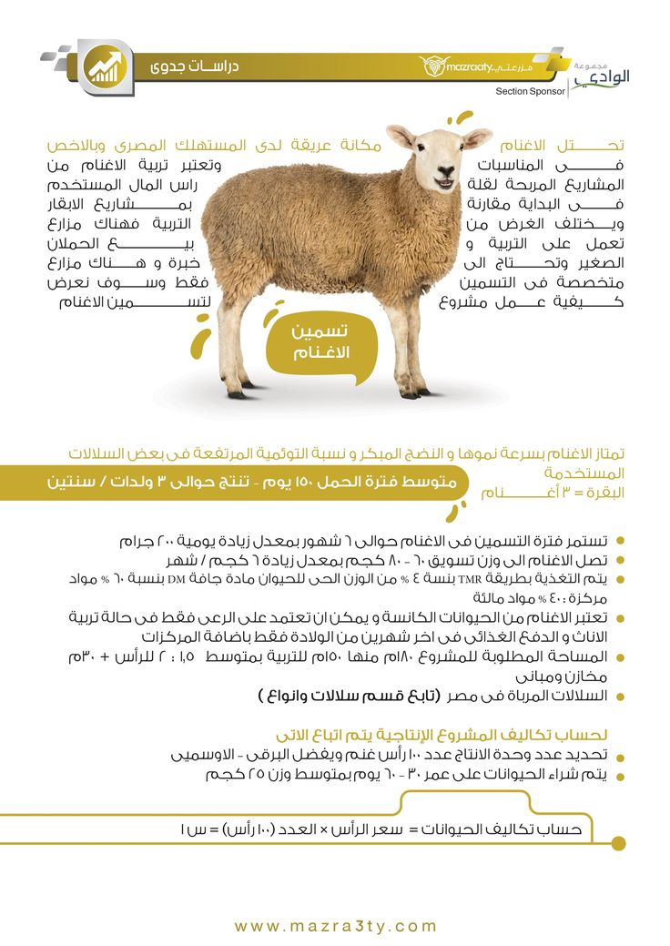 الصفحه الاولي Animals Kangaroo List