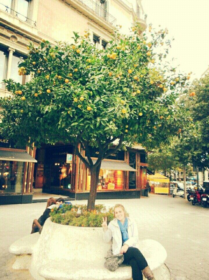 Lemon tree, Barcelona