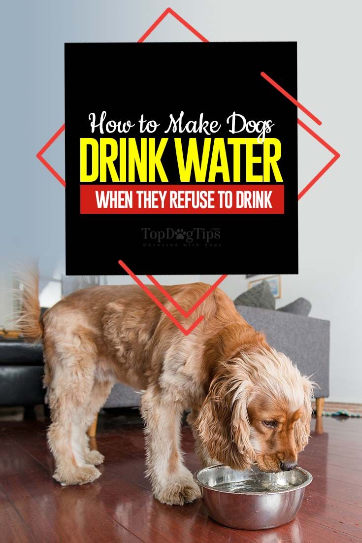 how to make dog drink water