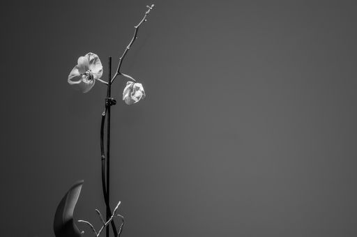 """Check out my art piece """"Orchid Black and White"""" on crated.com"""
