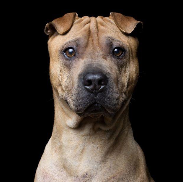 Em 'Animal Soul', fotógrafo Robert Bahou captura a profundidade existente na alma de cães e gatos.