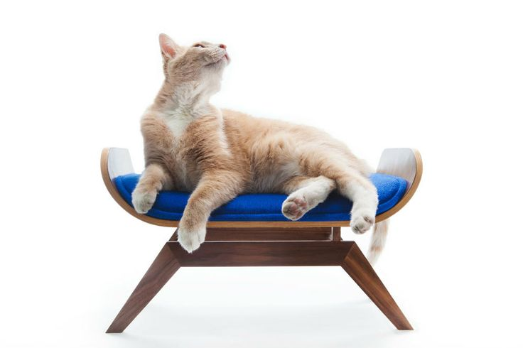 the canopy lounge, eames inspired by canopystudio #midcentury #cats