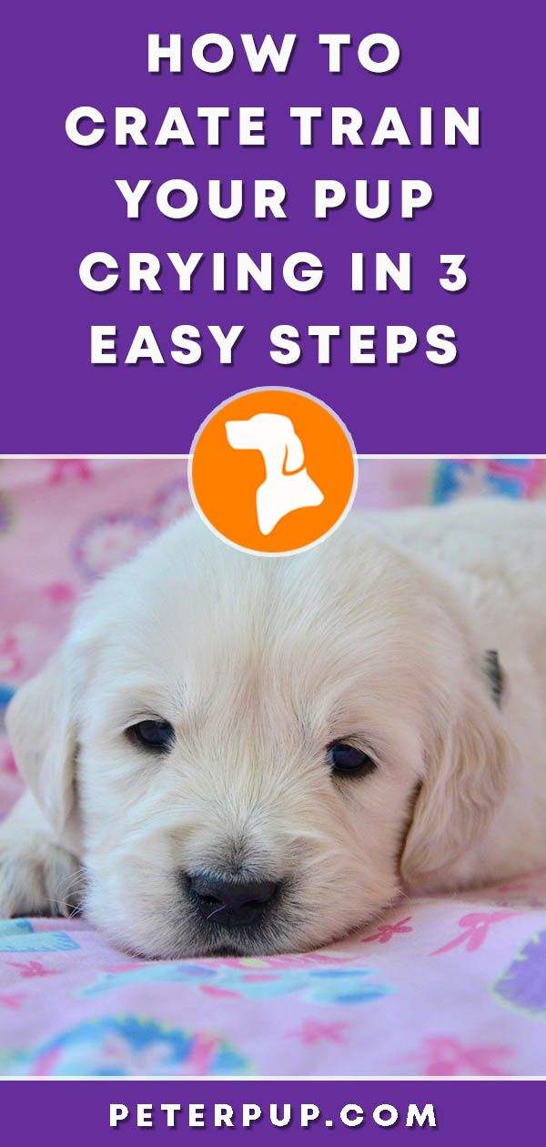 How To Stop Puppy Crying In Crate At Night Puppy Training Schedule Training Your Dog Dog Training