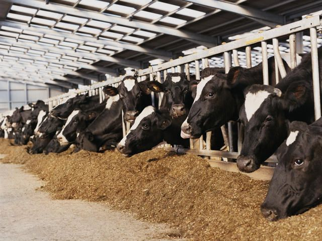 World Wildlife Fund & Innovation Center for US Dairy collaborate on sustainable food production
