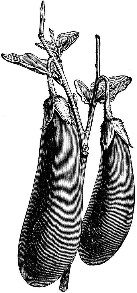 Vintage Aubergine Illustration