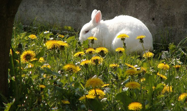Plant a Bunny Backyard: Meals You Can Develop in your Pet Rabbit