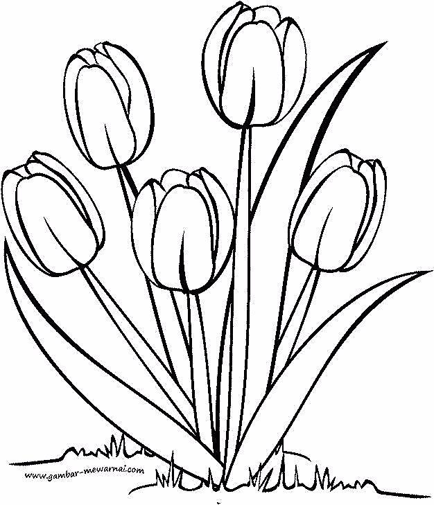 Bunga Tulp In 2020 With Images Bunga Tulip Shade Perennials