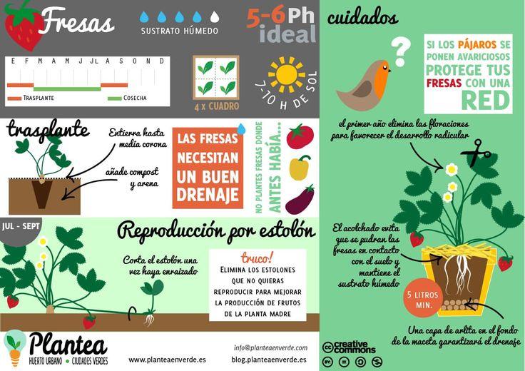 Green Garden, Herb Garden, Home And Garden, Green School, Forest Garden, Pallets Garden, Plantar, Growing Vegetables, Gardening Tips