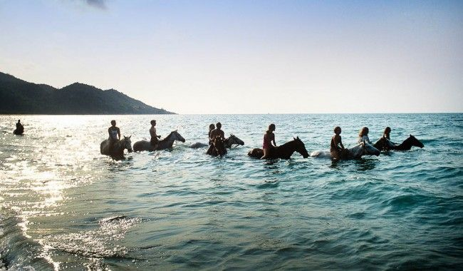 A swim with horses in where else but Horseshoe Bay, Magnetic Island #townsvilleshines #horses #travel #queensland