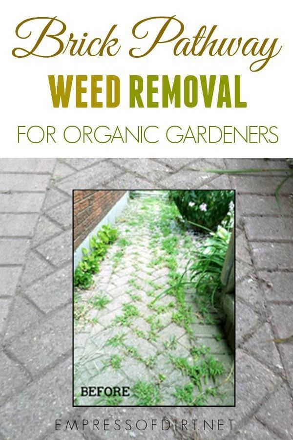 Removing Weeds From Bricks Without Herbicides Brick Pathway