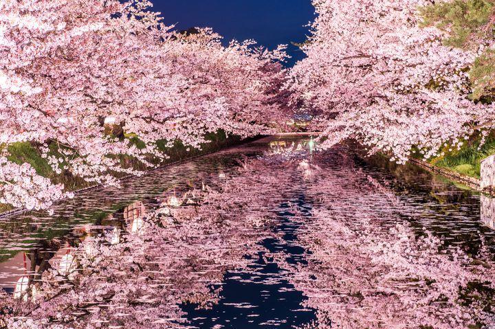 その美しさに言葉を失う。東京都内で見ることのできる魅惑的な夜桜スポット10選 | RETRIP[リトリップ]