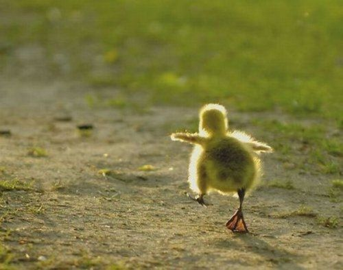 Hot...hot...hot..hot...: Chicken Nuggets, Waddles Waddles, Chicken Runs, Baby Ducks, Hot Hot Hot Hot