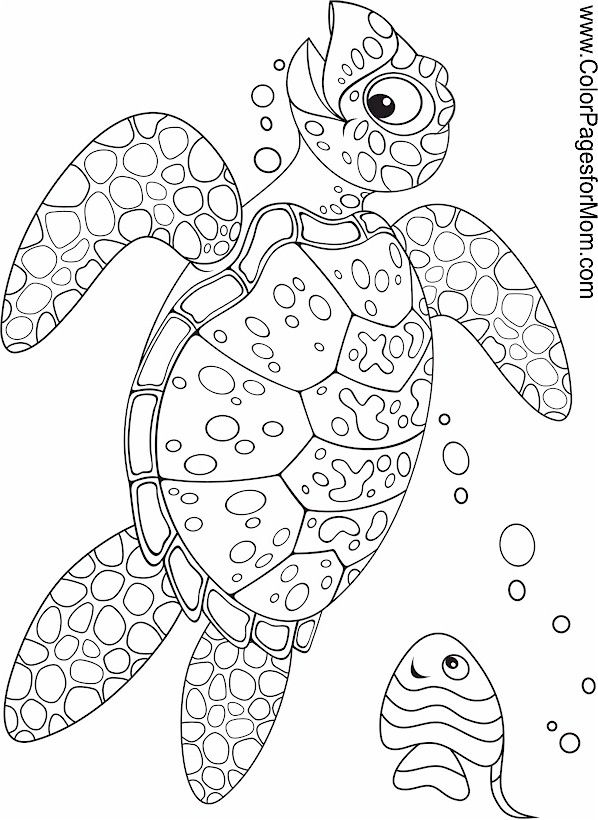 Reef Shark Coloring Pages