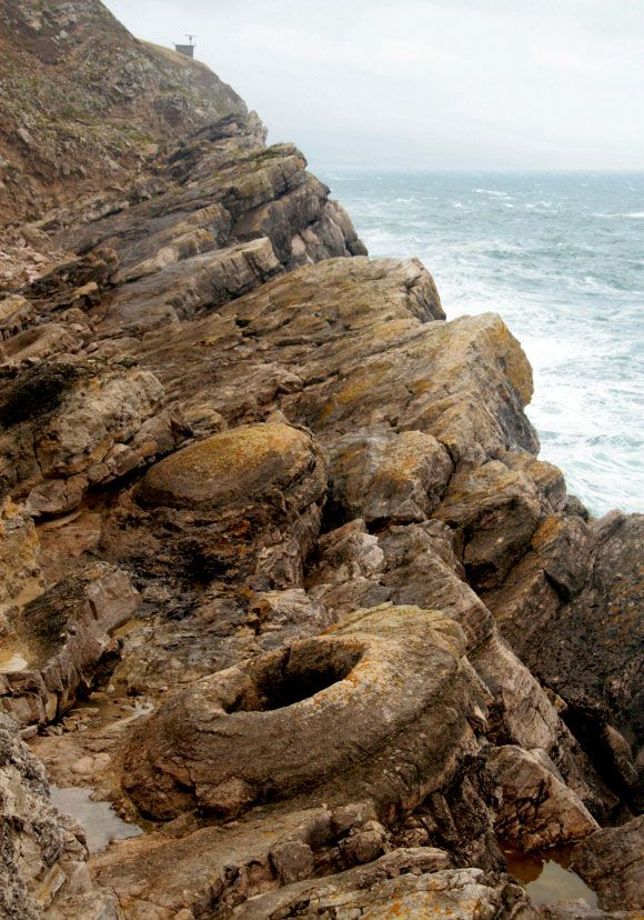 The fossil forest near Lulworth.