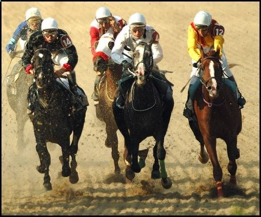 Want to win big in horse race betting then follow our free horse racing tips and take home a large sum of money.