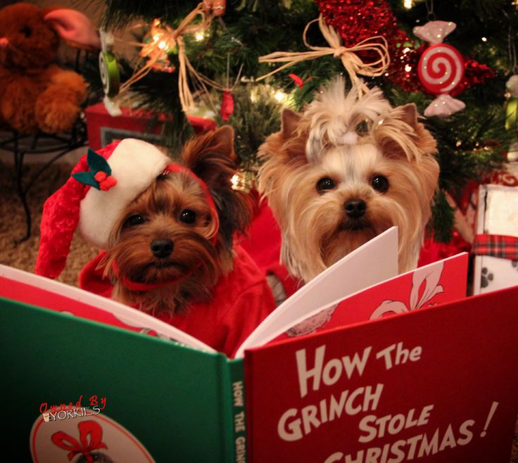 :) Dogs are happy to read you some Christmas classics because they aren't afraid of the Grinch.
