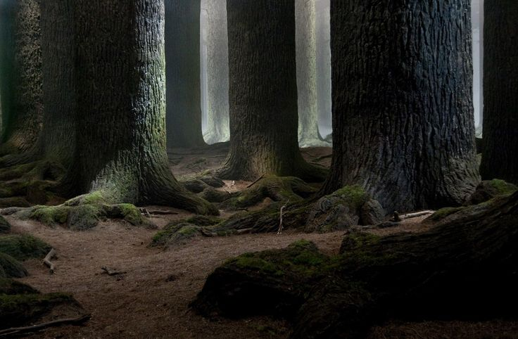 The Forbidden Forest, Deathly Hallows Part 2 | Harry ...