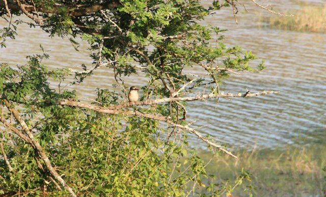 A King Fisher in Hluhluwe-iMfolozi Park during an Ubizane organised game drive
