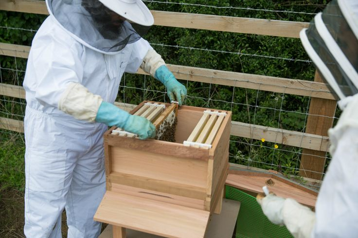Bees at Gloucester Services