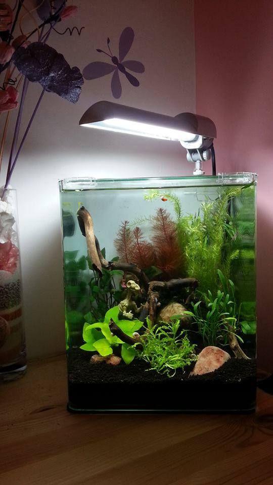 239 best freshwater aquariums images on pinterest for Best freshwater aquarium fish combination