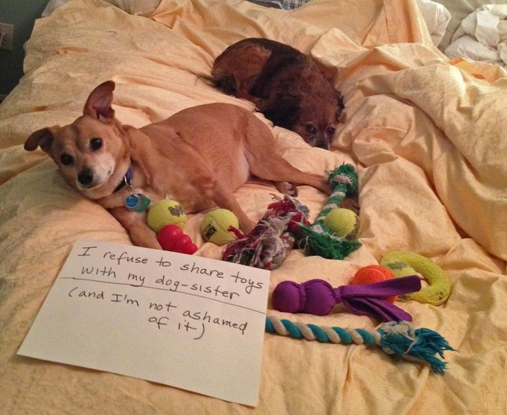 Dog Brings Toy To Bed