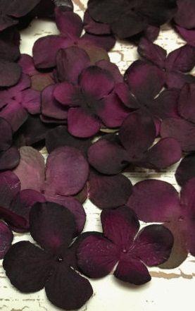 fleurs de lilas, violet sombre