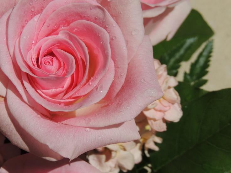 Moist Rose